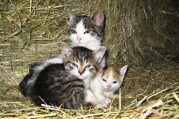 Mohrlis Katzenkinder
